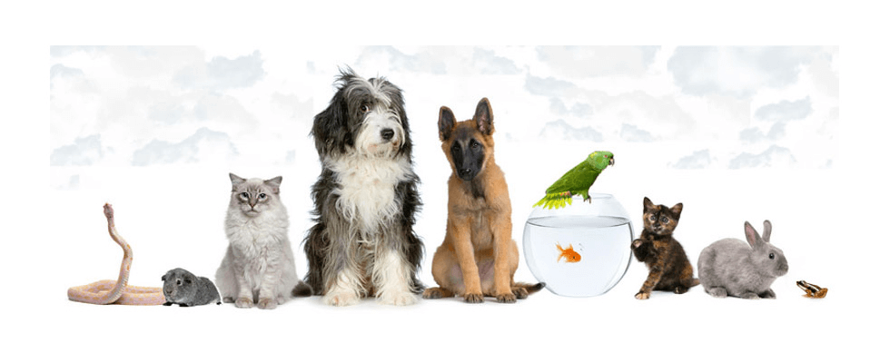 Pet Cremations and Funerals – Nelson, New Zealand -